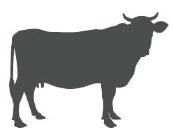 icone-bovin