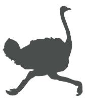 icone-ratite
